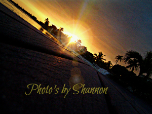 Photo's by Shannon